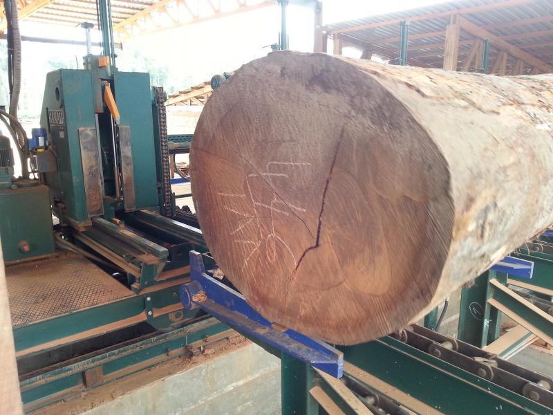 Komplettes Sägewerk für Tropenholz in Gabun